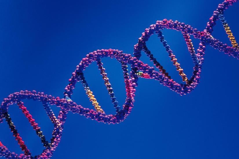 Cerebro, entorno y genética, como causas de laesquizofrenia.